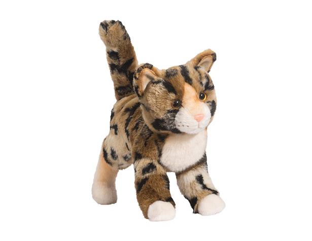 Tashette - chat du Bengal
